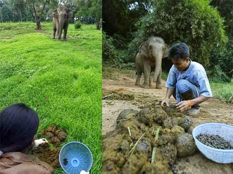 Black ivory coffee making in Hindi