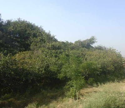 Amazing Deadliest Banyan Tree at Punjab Hindi History