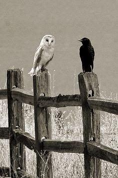 Shakun Shastra - Shakun Apshakun for owl and crow in Hindi