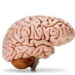 Memory Booster Food : याददाश्त बढ़ाने में लाभदायक है ये 20 चीजें