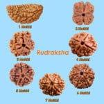 Benefits of Rudraksha : जानिए कौन से फायदे के लिए कितने मुख वाले रुद्राक्ष को धारण करना चाहिए?