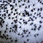 हैरतंगेज़ घटना- जब आसमान से हुई लाखो मकड़ियों की बारिश