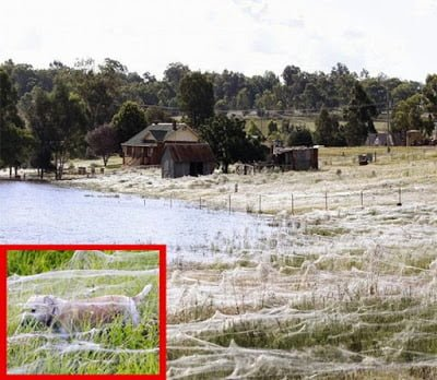 Amazing Incident : Spiders Rain Down On Australian Town