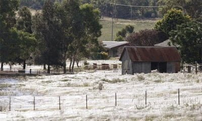 Spiders Rain Down On Australian Town