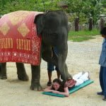 थाईलैंड- यहां हाथी भी करते है इंसानो की मसाज