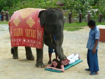 Elephant massage Thailand Chiang Mai
