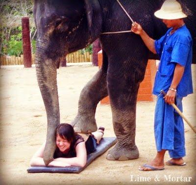 Elephant massage Thailand Chiang Mai in Hindi