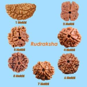 Benefits of Rudraksha in Hind, Fayde,