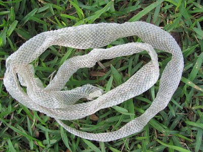 Interesting facts of shed snake skin in Hindi