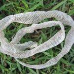 जानिए सांप के केंचुली उतारने से जुड़े रोचक तथ्य : Interesting facts of shed snake skin