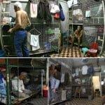 इस देश में जानवरों को नहीं इंसानों को रहना पड़ता है छोटे-छोटे लोहे के पिंजरों में