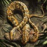 क्या है चार पैरों वाले सांपों का रहस्य? (Four legged snake mystery in Hindi)