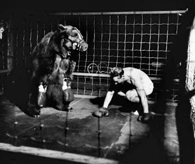man bear professional fighting Story in Hindi