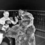 नरभक्षी भालू और इंसानो के बीच भी होती थी प्रोफेशनल बॉक्सिंग