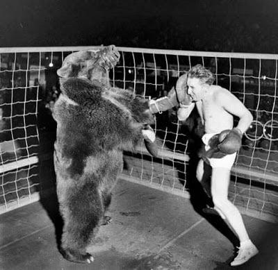 Man Bear fight 4