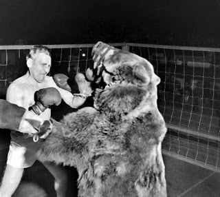 man bear professional fighting history in Hindi