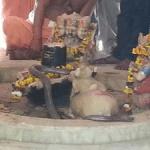 सलेमाबाद शिव मंदिर में पिछले 15 सालों से रोज़ नाग आ कर करता है शिव जी की पूजा