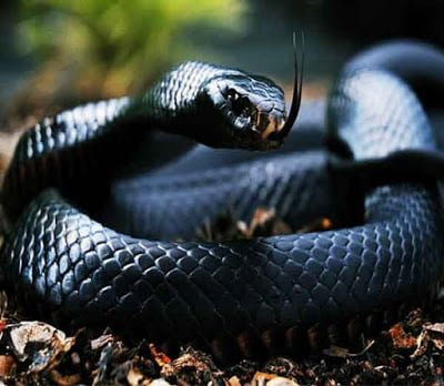 Why Snakes Bite Humans, Hindi Information,