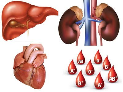 Value  of human body parts in Hindi