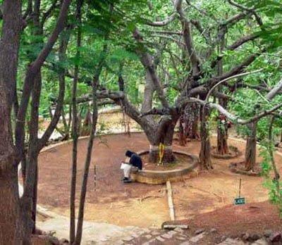 Meditation Tree, Hindi, History, Information, Story, Kahani, Jankari, Itihas,