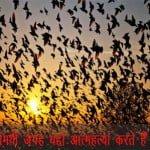 रहस्यमयी जटिंगा वैली- जहाँ सामूहिक आत्महत्या करते हैं पक्षी