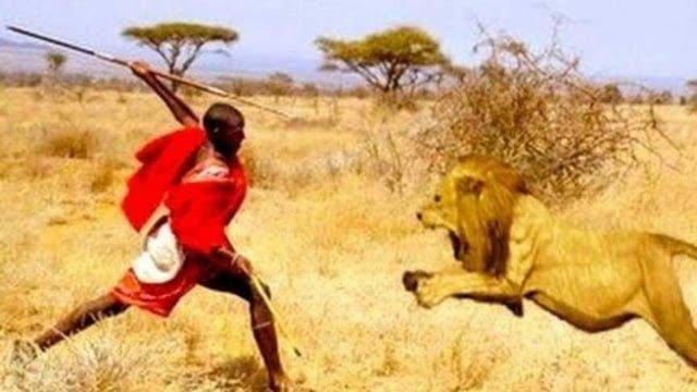 Maasai Lion Fighting in Hindi