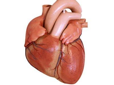 Heart rate in black market in world