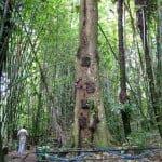 इस पेड़ में दफन किए जाते हैं गांव के सारे मृत बच्चे, जानिए क्यों?