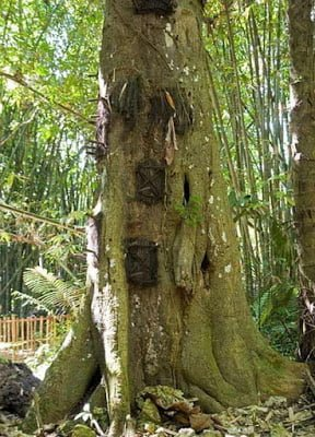 Tree graves of Indonesia Story in Hindi