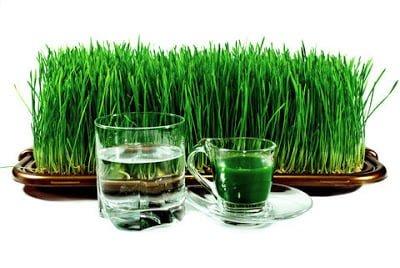Health benefits of wheat grass  in Hindi