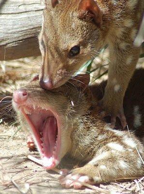 Dangerous mating rituals of animals in Hindi