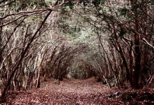 The Most Infamous Suicide Spots, Aokigahara forest, Mount Fuji, Japan, Hindi, Information, History, Itihas, Kahnai, Jankari,