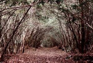The Most Infamous Suicide Spots, Aokigahara forest, Mount Fuji, Japan, Hindi, Information, History, Itihas, Kahnai, Jankari,