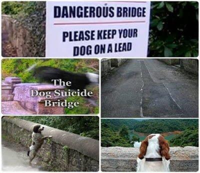 Mysterious Overtoun Bridge, Scotland, Hindi, Story, History, Kahani, Itihas, Rahasyamayi,