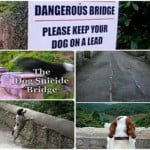 रहस्यमयी ओवरटॉन ब्रिज – जिस से कूदकर अब तक सैकड़ों कुत्ते कर चुके है आत्महत्या