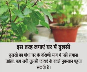 Vastu shastra tips for plants and trees in Hindi