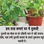 Vastu tips for plants and trees :भाग्य का साथ चाहते हैं तो ध्यान रखें पेड़-पौधों से जुड़ी 7 बातें