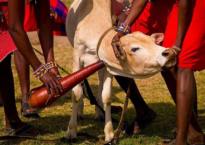 Image result for masai janjati