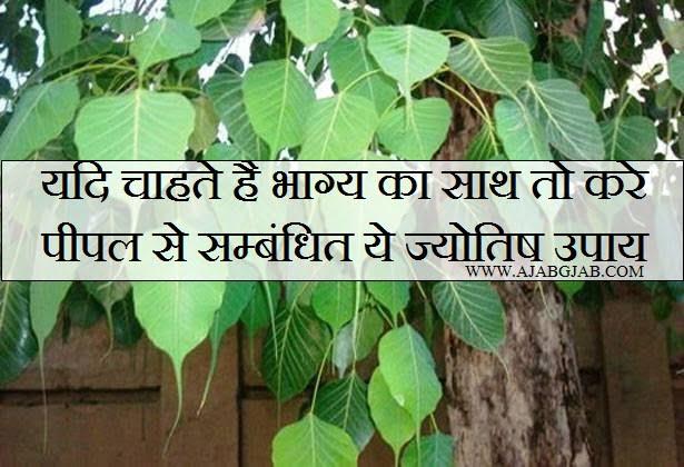 Pipal Ke Jyotish Upay in Hindi