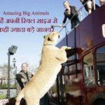 Amazing Big Animals : ये है अपनी रियल साइज से कही ज्यादा बड़े जानवर