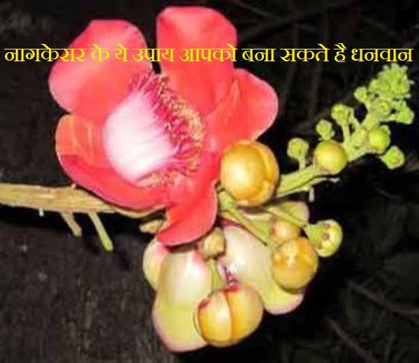 Nagkesar Ke Jyotish Upay & Totake