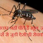 नर मच्छर नहीं पीते है खून, जानिए मच्छरों से जुडी ऐसी ही रोचक बातें