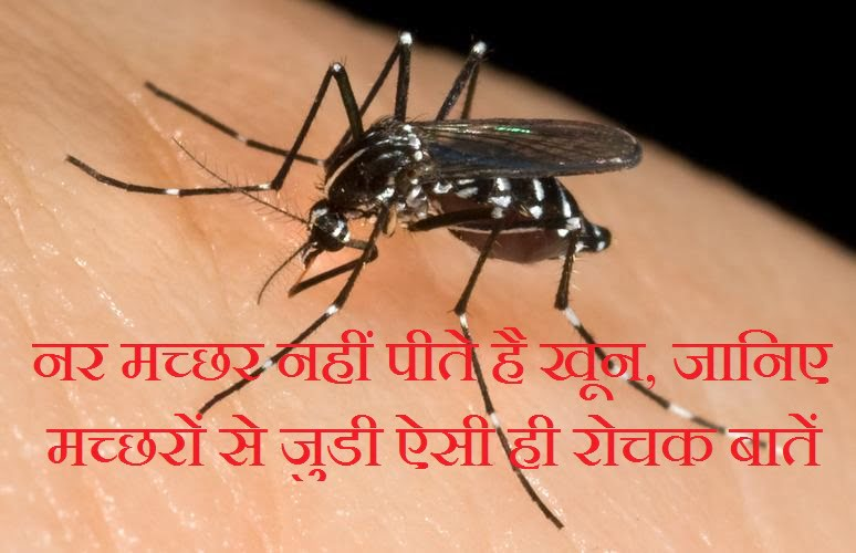Interesting Facts About Mosquitoes, Hindi