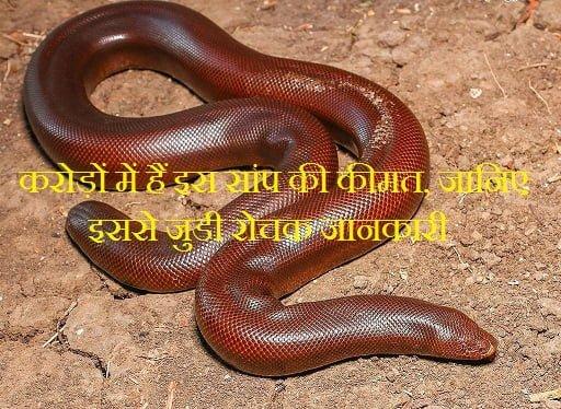Hindi Fatcs About Red Sand Boa Snake