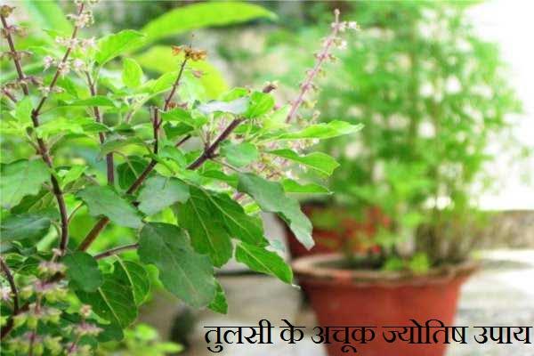 Tulsi Ke Jyotish Upay