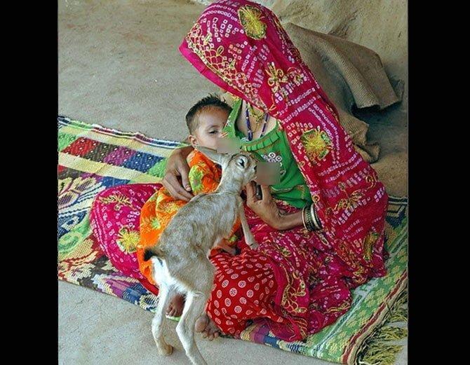 Bishnoi Tribe Women Breastfeed Deer Like Mother, Bishnoi Tribe, Hindi, Story, Kahani, History, Itihas, Information, Amrita Devi Bishnoi, Sacrifice,