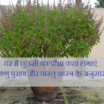 घर में तुलसी का पौधा कहां लगाएं | विष्णु पुराण और वास्तु शास्त्र के अनुसार