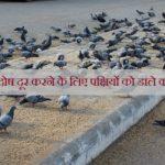 किस ग्रह का दोष दूर करने के लिए पक्षियों को डाले कौनसा अनाज