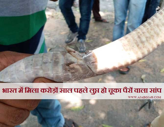Rare Cobra Snake Found In India, Hindi, Information, Story, Kahani, History