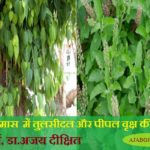 Importance Of Peepal And Tulsi In Vaisakh Month